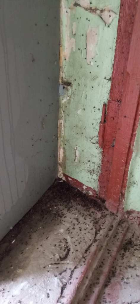 Жители многоквартирного дома в Рязани пожаловались на нашествие мух