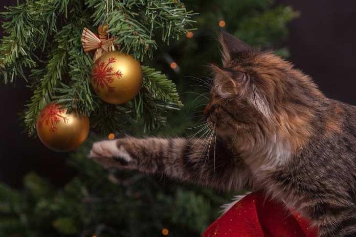 Ёлка как искусство. Ищем альтернативу классическому новогоднему дереву