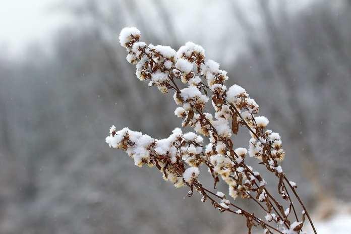 В понедельник в Смоленской области местами ожидаются слабая метель и небольшой снег