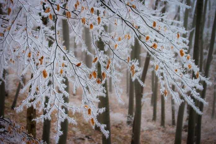 МЧС по Рязанской области выпустило метеопредупреждение о морозе
