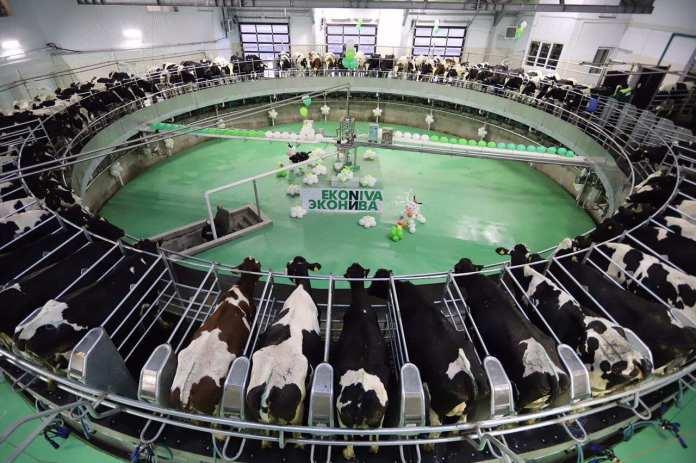 Рязанская область наращивает производство молока
