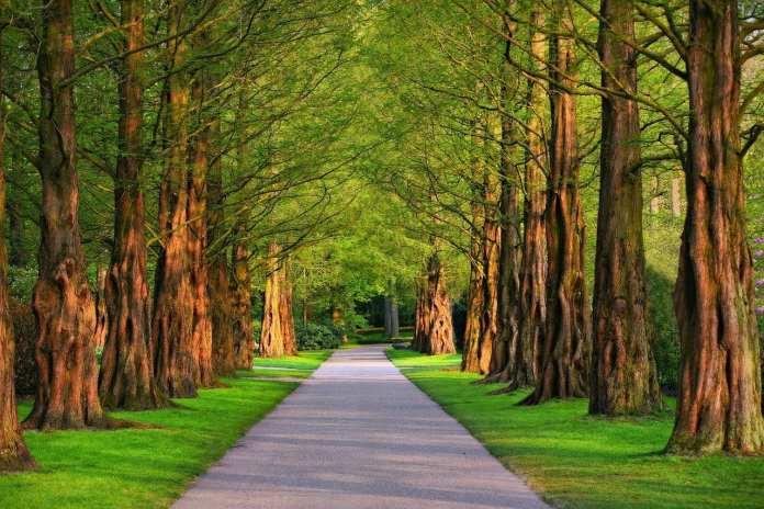 Благотворительный фонд построит несколько новых парков в Костроме