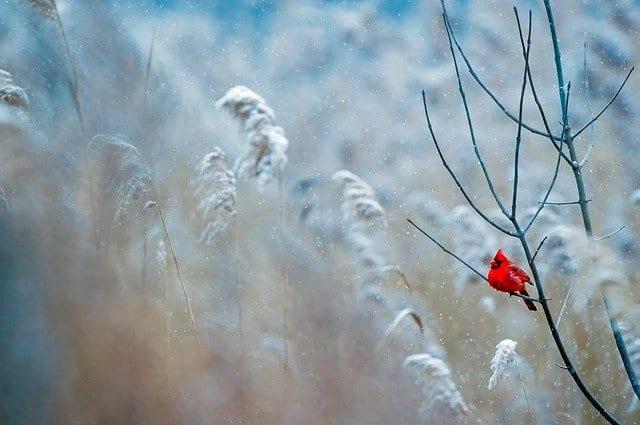 В четверг в Рязани потеплеет до -7°С