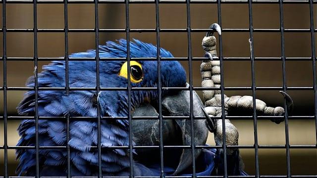 В России предложили запретить продавать животных в зоомагазинах