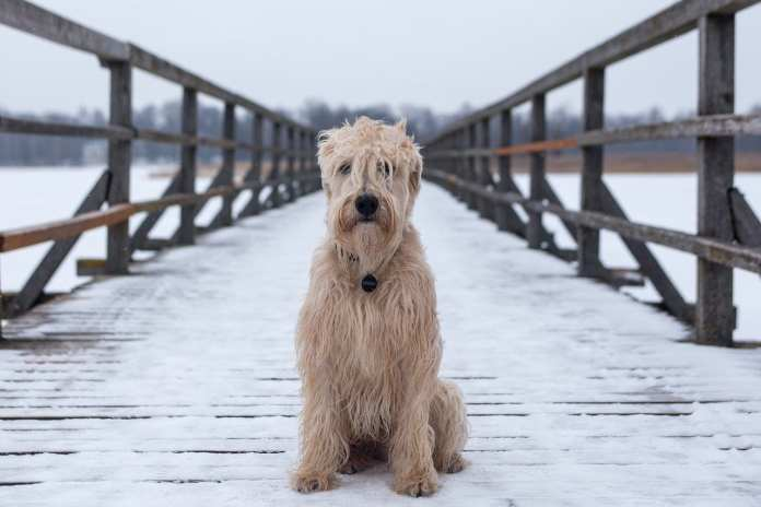Рязанцы жалуются на собачьи экскременты на всех улицах города