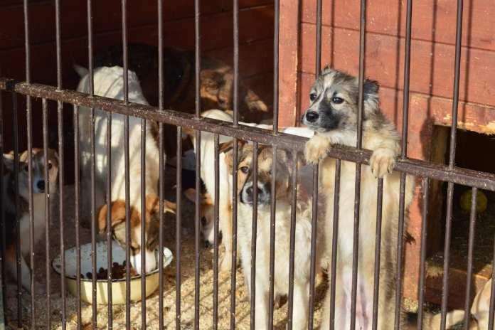 В Республике Коми стая бездомных собак покусала четырехлетнюю девочку