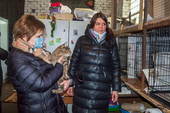 14 млн рублей выделили Рязани на отлов, вакцинацию и стерилизацию бездомных собак
