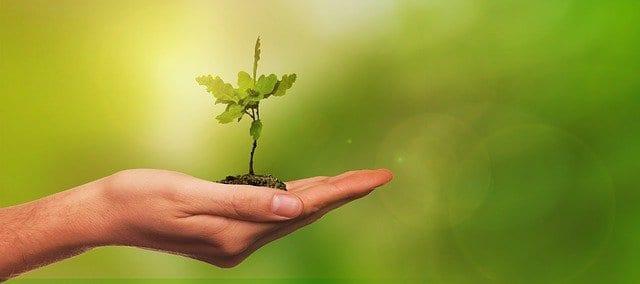 Депутат областной Думы выступает за масштабное озеленение Рязани