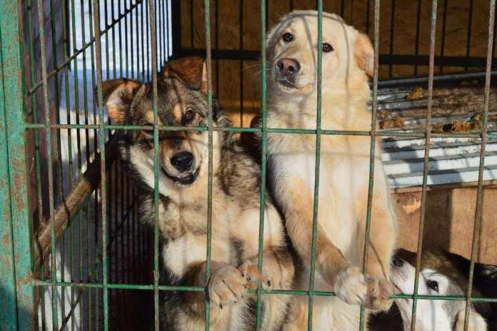 В Татарстане стая собак напала на 11-летнего мальчика