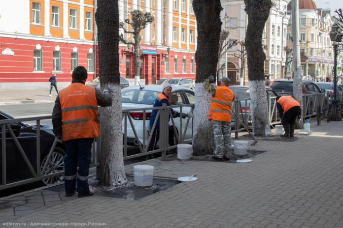 В Рязани начали белить деревья