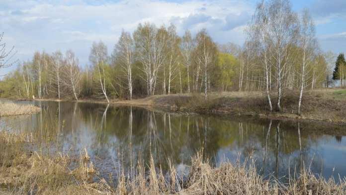 Глава поселения объяснил случай массовой гибели рыбы в Старожиловском районе