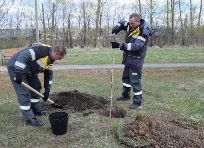 Благодаря рязанскому нефтезаводу в Турлатове появится дубовая роща
