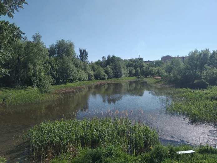 В Рязани сильно обмелел Черезовский пруд в Дашково-Песочне