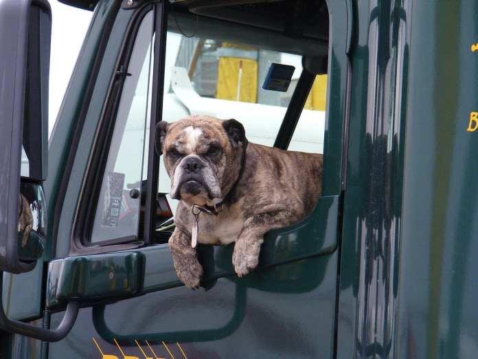Стало известно, как правильно перевозить собак