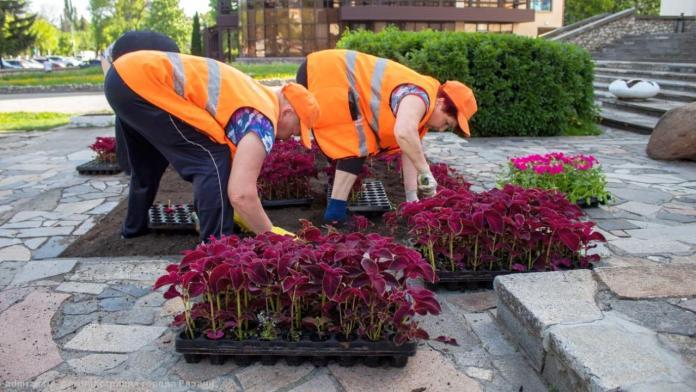 В Рязани продолжают высаживать цветы