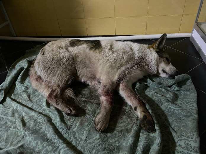 Неизвестные расстреляли в Полянах собак