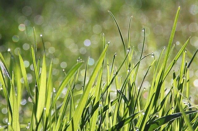 Народные приметы 19 июля: Что можно, а что нельзя делать в Сысоев день