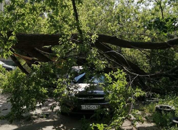 Дерево упало на автомобиль в Рязани