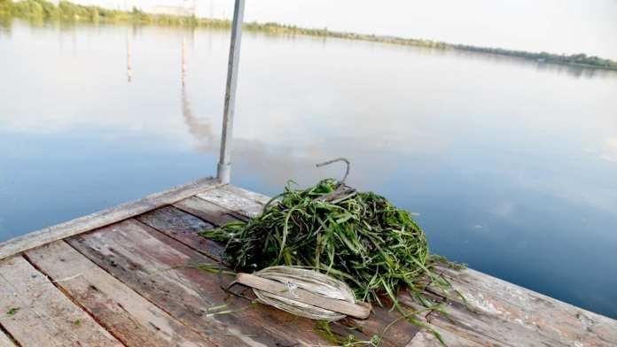 Дачник выловил человеческий череп из водохранилища в Новомичуринске