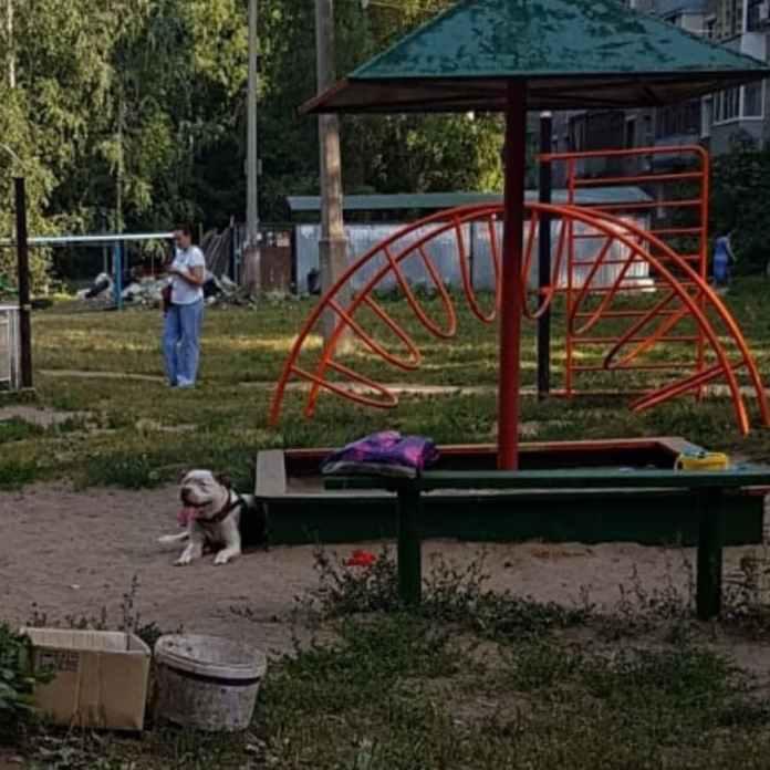 Рязанцы пожаловались на питбулей, гуляющих на детской площадке