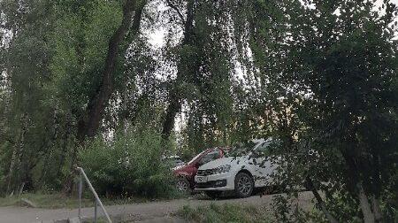 В Рязани огромная ветка упала на автомобиль