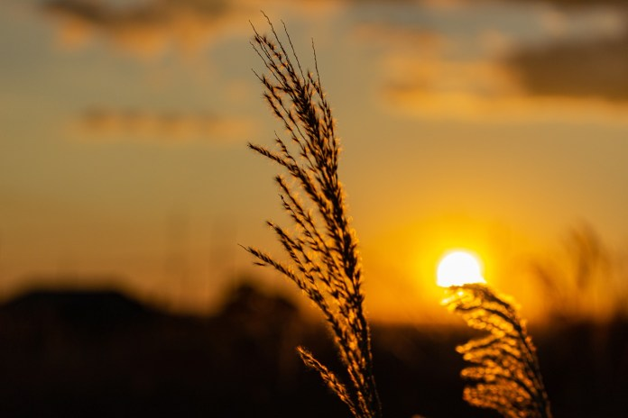 Народные приметы 27 августа: что нельзя и что нужно делать в день Михея-Тиховея