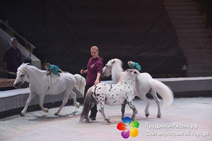 В Рязанском цирке прошла серия мастер-классов