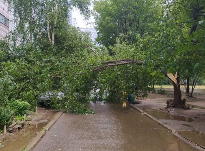 В Недостоеве сильный ветер уронил дерево на автомобиль