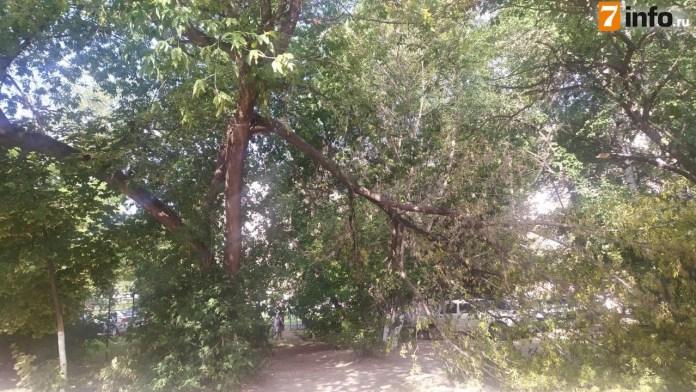 Огромная ветка упала пешеходную дорогу на улице Чкалова в Рязани