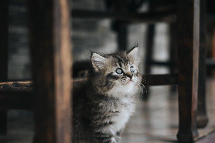 Житель Екатеринбурга чуть не убил соседа, защищая котёнка