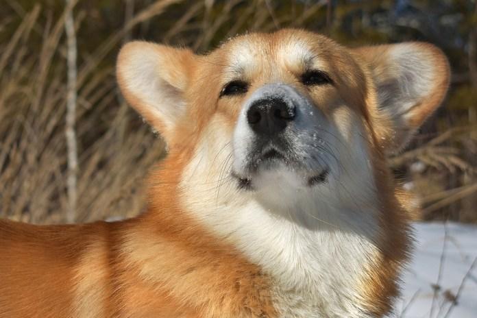 Пёс Рыжик спас заблудившуюся в лесу рязанку