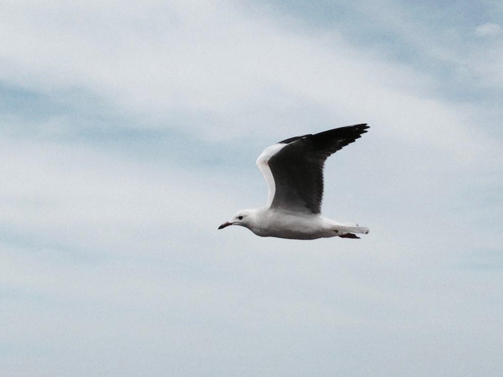 vogel fliegen trotz flugangst