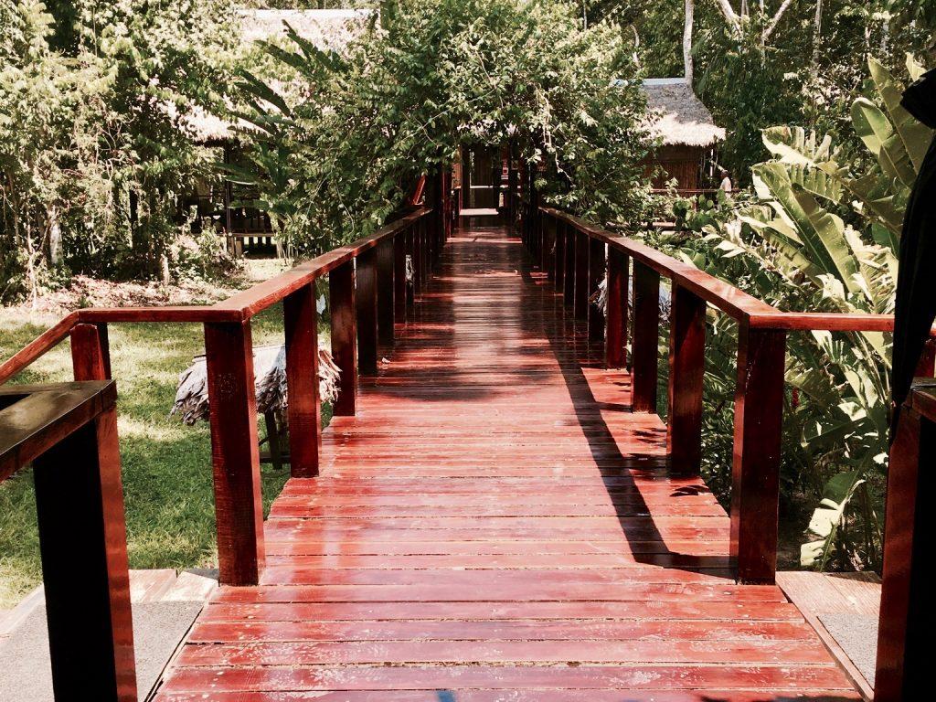 Amazonas Peru Regenwald