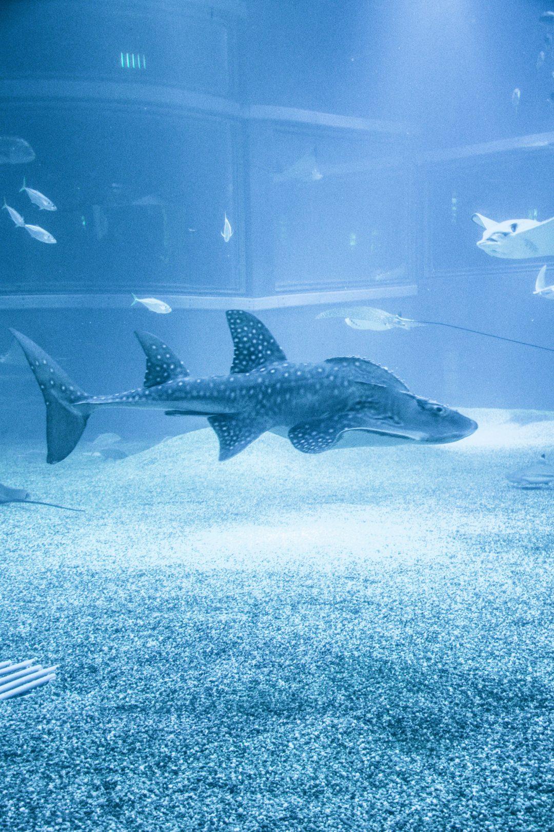osaka japan aquarium