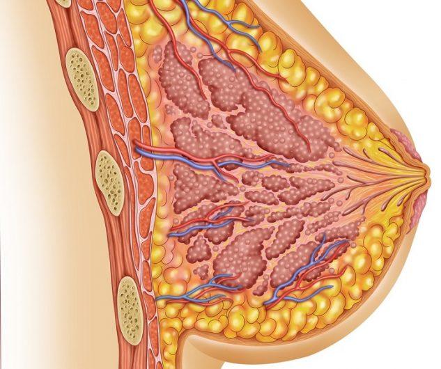 Почему болит и набухает грудь. Набухшая грудь: причины симптома, лечение