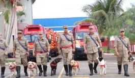 Bombeiros e cadelas que trabalharam em tragédia foram homenageados