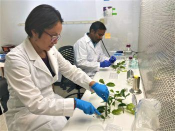 two people in white lab coats work in a lab with plant samples