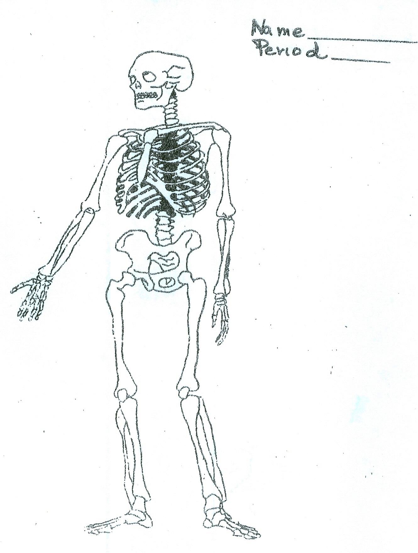 Skeletal Muscular System