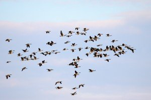 Extroverted Geese, Introverted Geese, and the Way People Pray