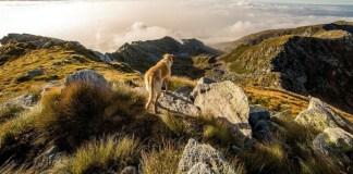 rutes amb gossos