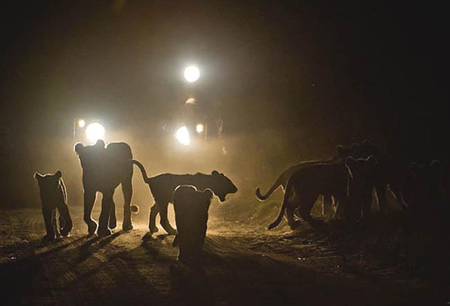 Manyara Night Game Drives