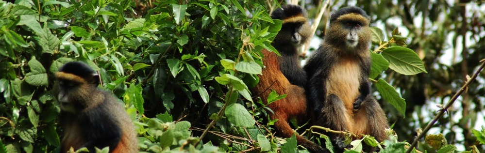 001-4-Days-Rwanda-Gorillas-and-Golden-Monkeys4