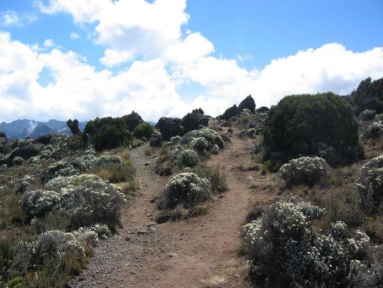 1200px-Shira_moorlands_on_Kilimanjaro