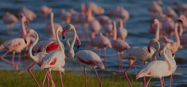 lake-manyara-national-park-flamingos