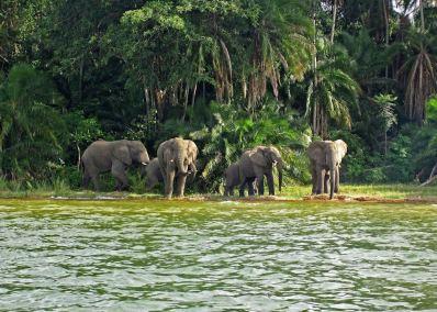 elephants-on-rubondo-island-lake-victoria.jpg
