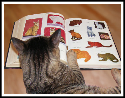 Note: cat chow in fold.