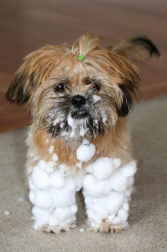 snow pants (via childplay {Tiffani})