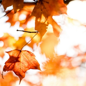Fall is a great time to start new resolutions! Find out why here!