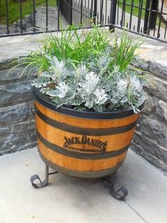 Jack's plants!