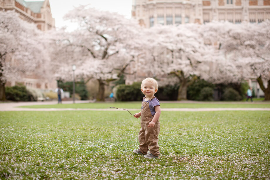 Owen | University of Washington Cherry Blossoms